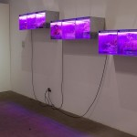 installation Astroculture (Shelf Life) 1